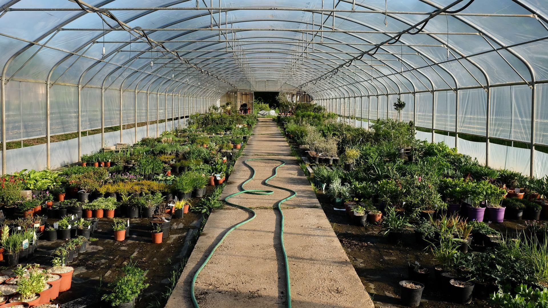 P pini re jardinerie dans le tarn jardins des bastides for Jardinerie des jardins