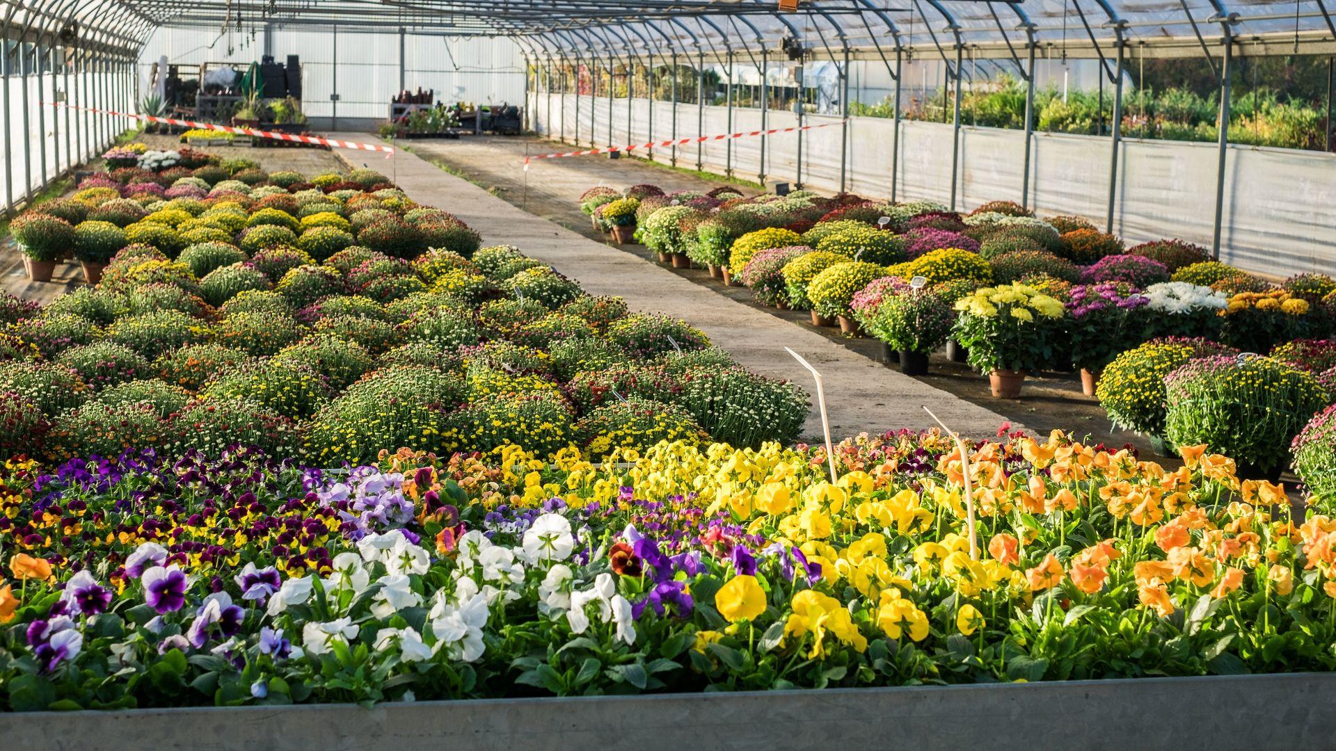 p pini re jardinerie dans le tarn jardins des bastides