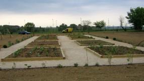 plantation (37)