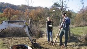 planter arbres racines nues tarn et garonne