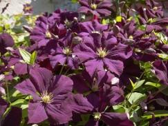 flowers-1241997_960_720
